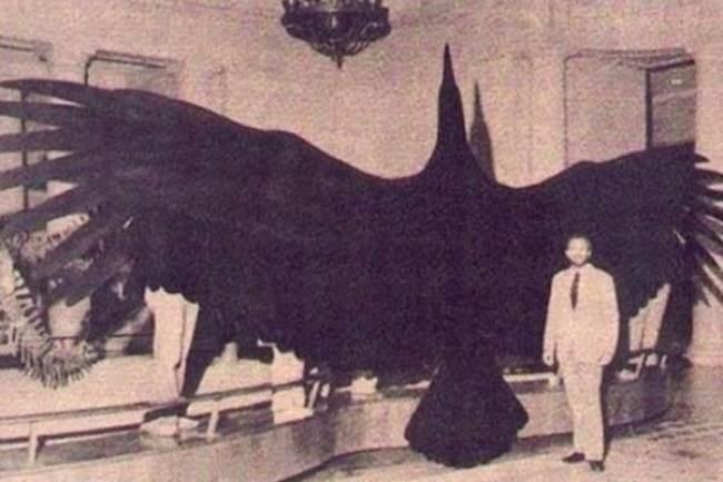 بزرگ ترین پرنده
